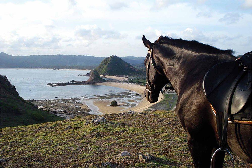Horse Riding Lombok