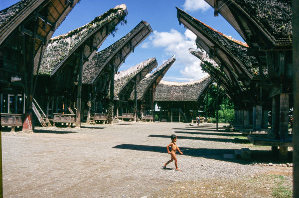 Life & Death in Toraja