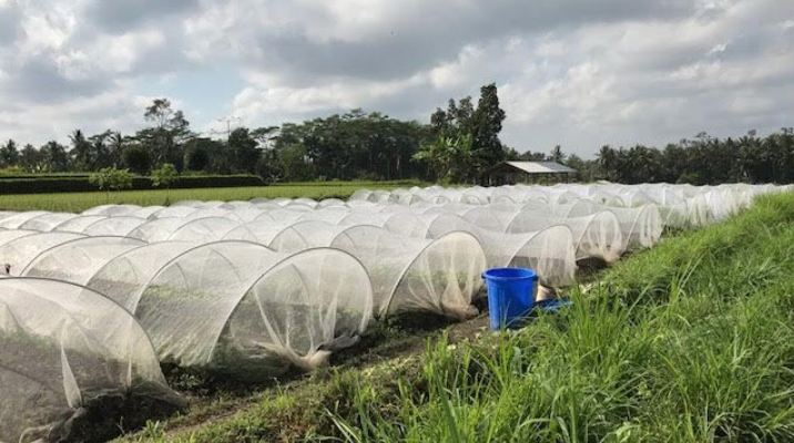 Sustainability, Permaculture And Organic In Bali