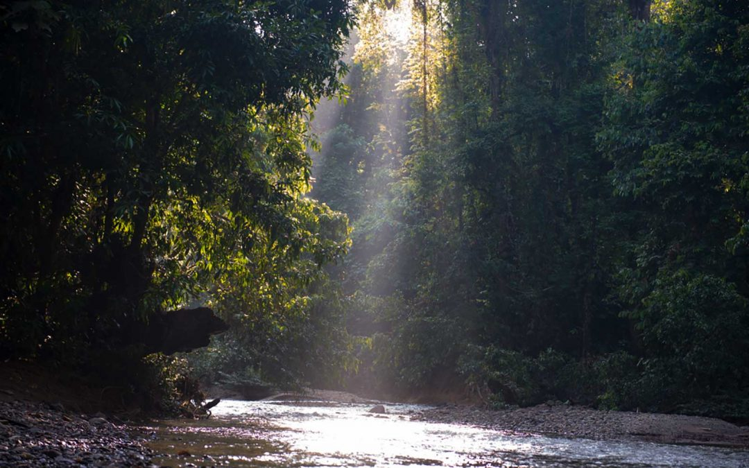 Setulang – Deep in the forest, North Kalimantan