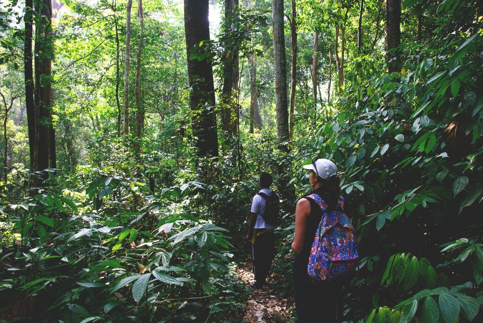 A Jungle Stay in Gunung Leuser National Park, Aceh – North Sumatra